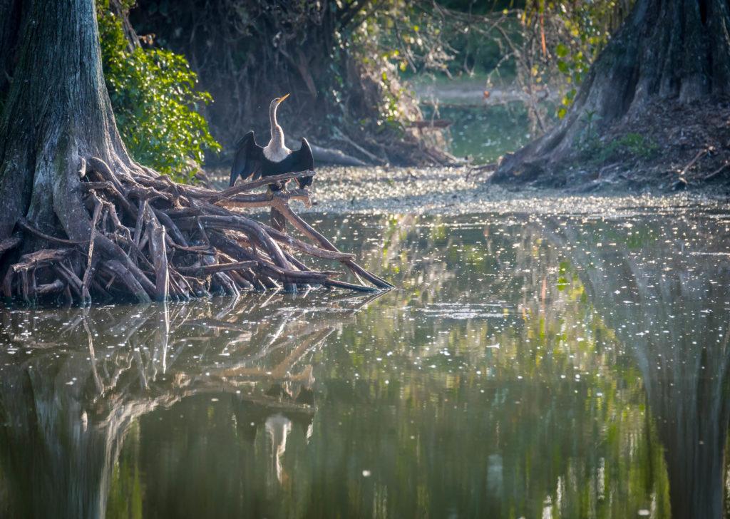 Bird Photography Bob Gibson Photo Workshops Riverbend Park, Jupiter Florida