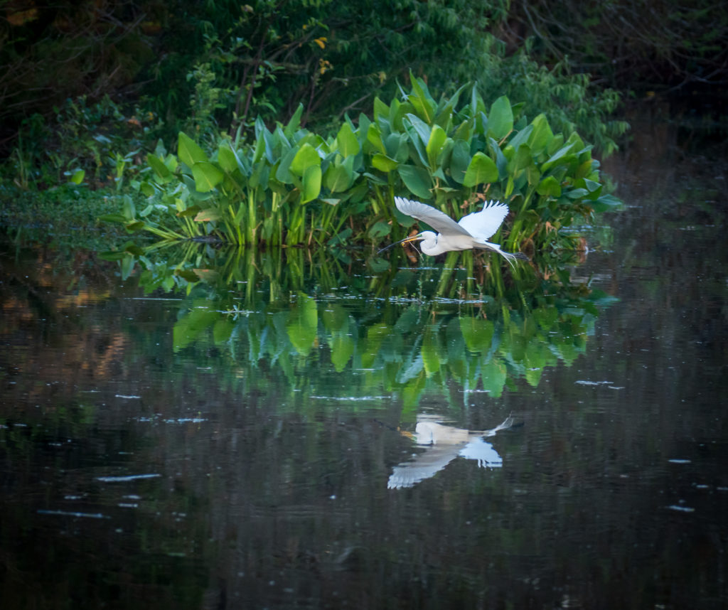 Great Egret Photo Masters Workshops Wakodohatchee Wetland Preserve