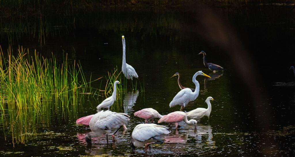 Florida Bird Photography